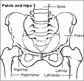 A diagram showing hips